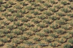 Olive grove. Badajoz, Spain