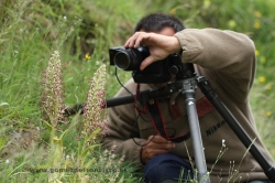 Photographing orchid Himantoglossum hircinum. Spain