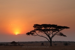 Sunrise at Seronera, Serengeti National Park, Tanzania