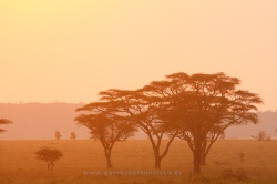Sunset at Seronera, Serengeti National Park, Tanzania