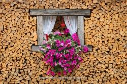 Firewood. Mazzin, Dolomiti, Alps, Italy