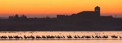 Cranes (Grus grus) at sunrise. Otero de Sariegos, Villafáfila Natural Reserve, Zamora (Spain)