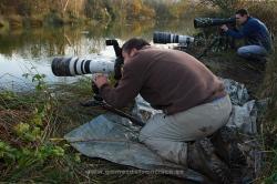 Photographing Grey phalarope (Phalaropus fulicaria). Spain