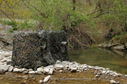 Photographing dipper (Cinclus cinclus). Spain