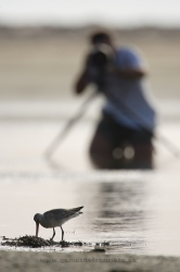 Photographing waders. Spain