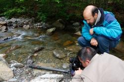 Photographing pyrenean frog (Rana pyrenaica). Spain