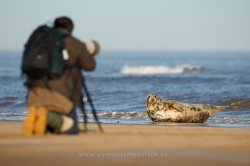 Photographing seals. England