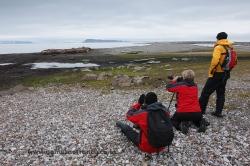 Photographing walrus (Odobenus rosmarus). Svalbard