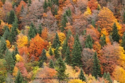 Otoño en el Valle de Bujaruelo, Parque Nacional de Ordesa y Monte Perdido (Huesca)