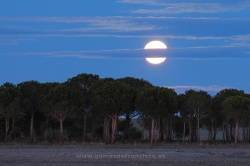 Fullmoon over Villafáfila Lakes Natural Reserve, Zamora (Spain)