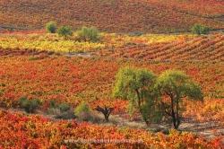 Cenicero, La Rioja (Spain)