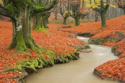 Autumn, Gorbea Natural Park, Vizcaya (Spain)