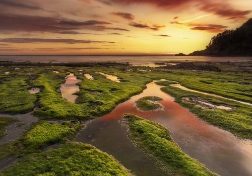 Verdes en el Mar