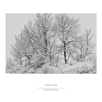 Greys scale - trees