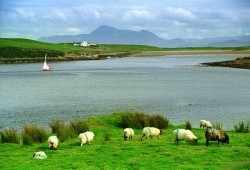 "report Ireland: ""I love green"""