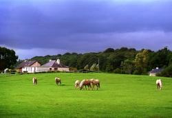 "report Ireland: ""I love green"""
