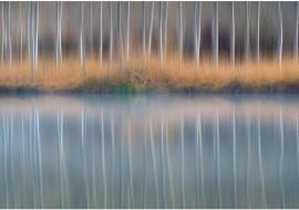 "porfolio: ""impresionismos"" título: ""homenaje a Morisot"""