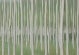 """porfolio: """"impresionismos"""" título: """"homenaje a Touluse-Lautrec"""""""