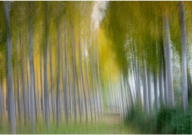 "porfolio: ""impresionismos"" título: ""homenaje a Renoir"""