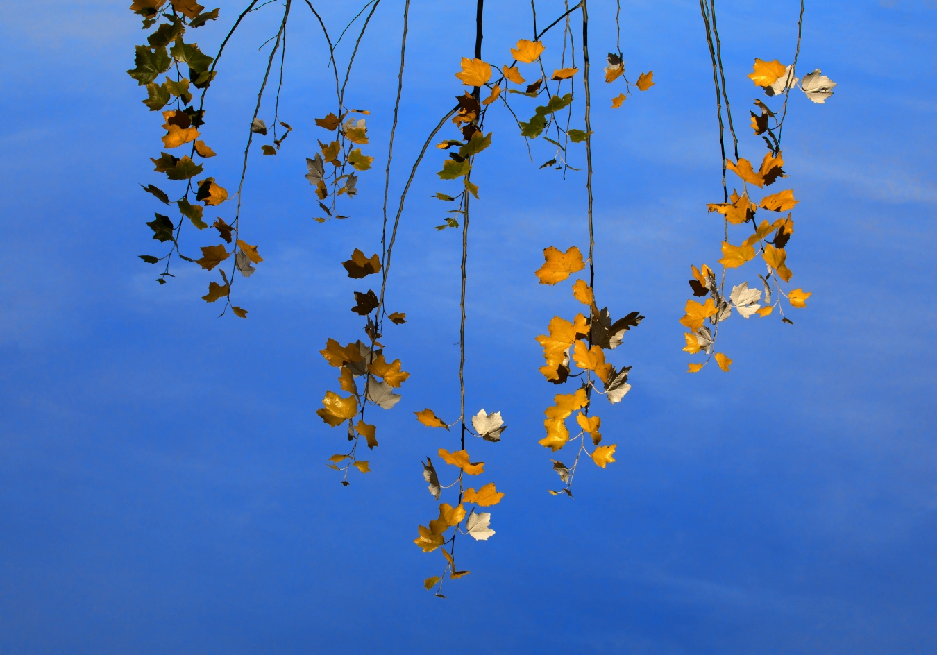 Leaves in the Sky - Nature I - Luis Checa, Fotografía Creativa