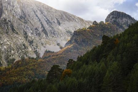 Capas de vida, Pirineos.