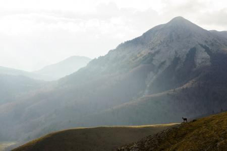 Vigilando sus dominios, Pirineos.