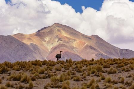 Ave del paraíso, Bolivia.