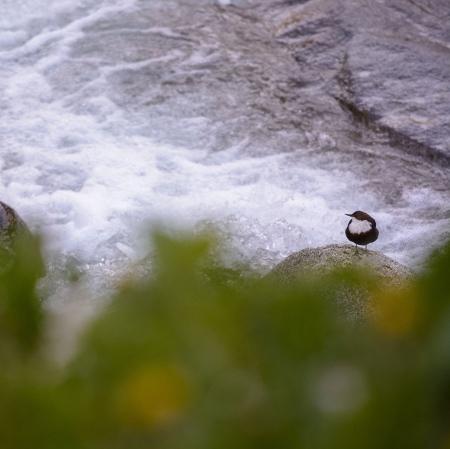 El rey del rio, Pirineos.