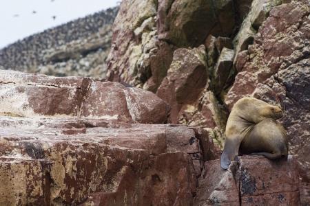 Caaansos de pájaros. Perú.