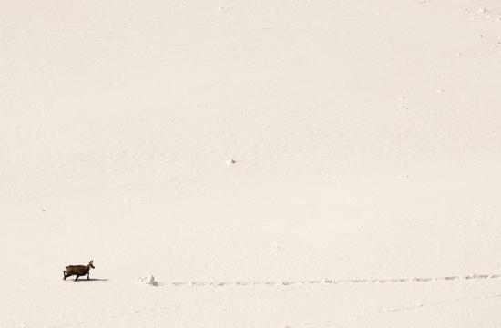 Cruce de caminos, Alpes.