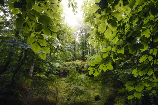 A la luz del bosque