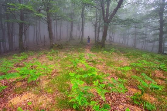 Bosques de misterio