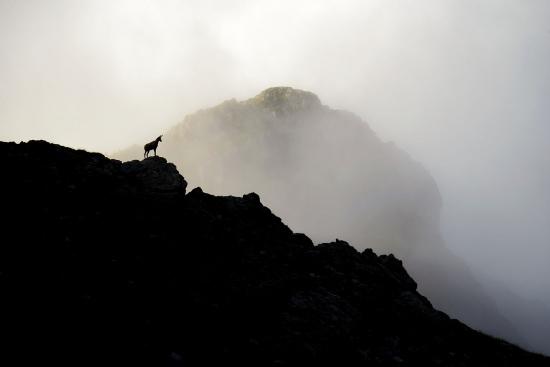 El guardián de las montañas