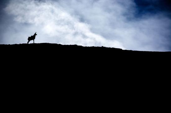 El rey de la montaña, Pirineos.