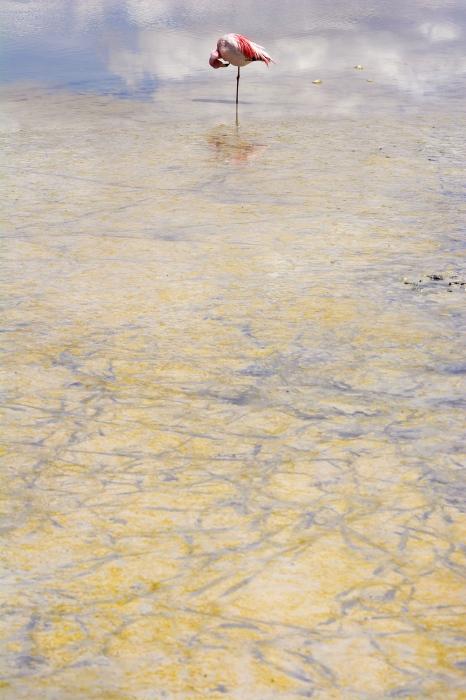Pinturas en el limo, Bolivia.