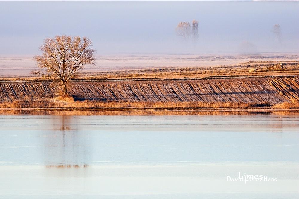 Paisaje al amanecer, junto a la laguna.Imagen David Pérez Hens - Paisaje con grullas  - Limes , David Pérez Hens