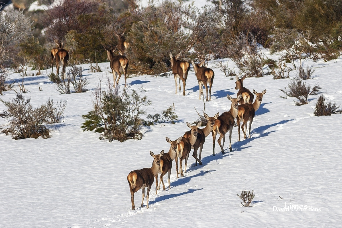 6 miradas, Fuentes Carrionas - Paisaje con ciervos - Limes , David Pérez Hens