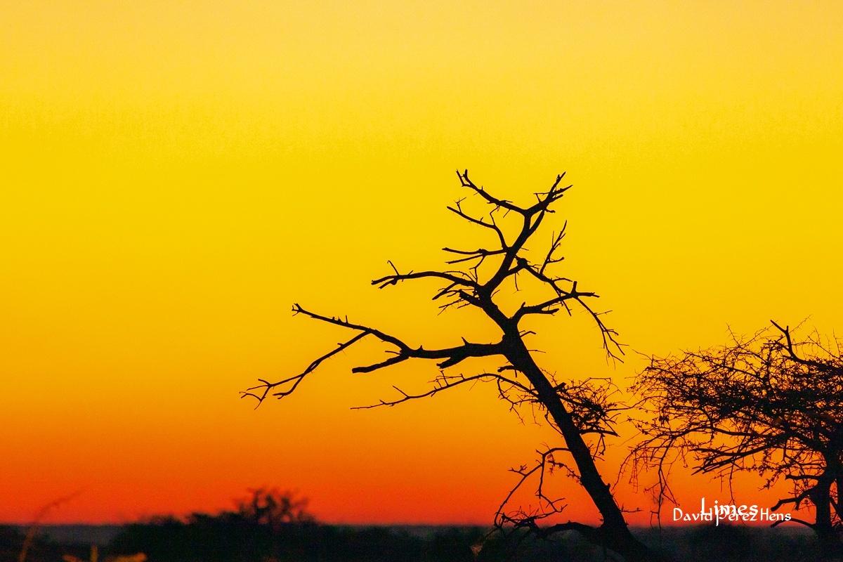 Atardecer en etosha - Sudáfrica-Namibia-Botsuana-Zimbabwe - Limes , David Pérez Hens