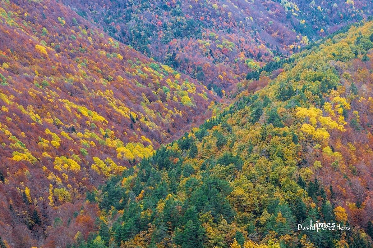La Pardina del Señor - Bosques encantados - Limes , David Pérez Hens