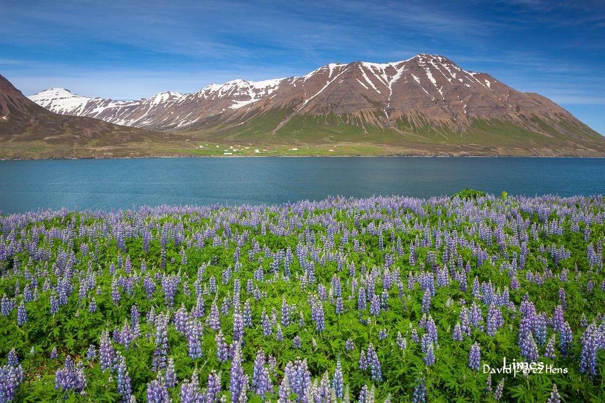 Fiordo del norte - Islandia. - Limes , David Pérez Hens