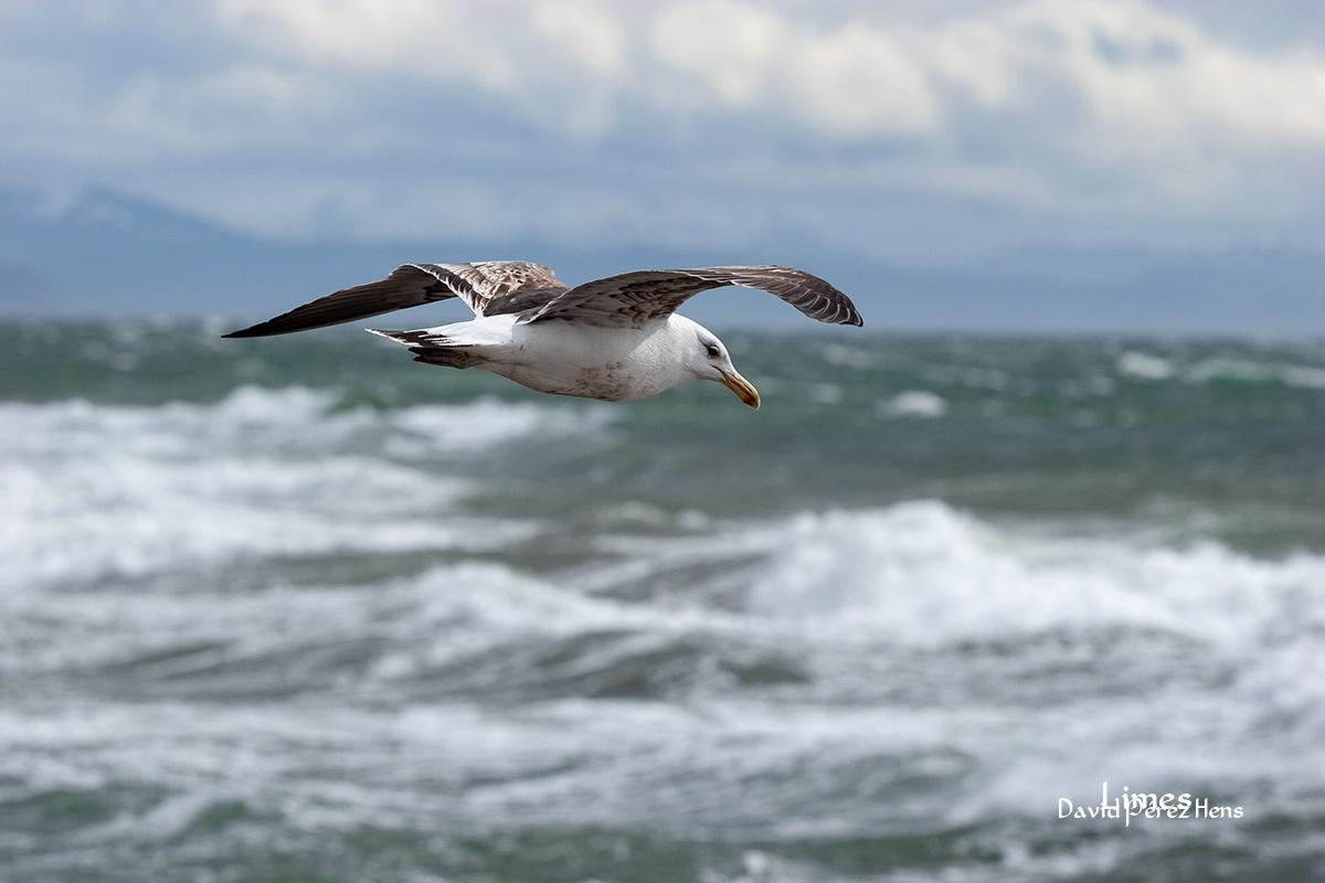 Sobrevolando el Estrecho de Magallanes - Chile - Limes , David Pérez Hens