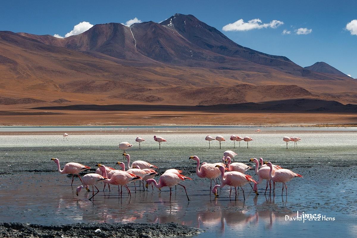 Laguna Hedionda - Bolivia - Limes , David Pérez Hens