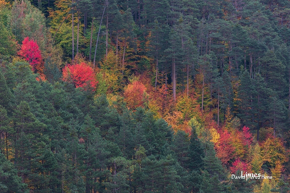 Contraste otoñal - Bosques encantados - Limes , David Pérez Hens