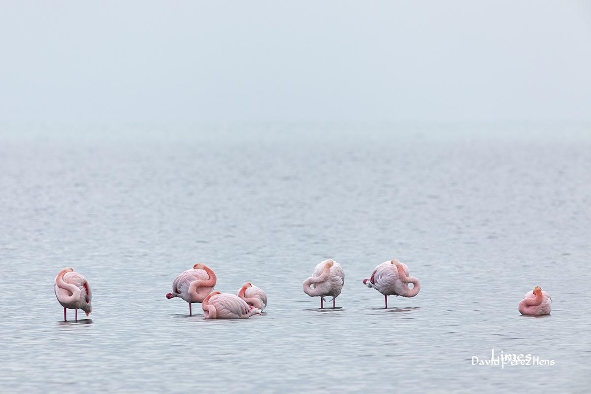 Descansando, Delta del Ebro - Paisajes deltaicos y humedales.  - Limes , David Pérez Hens