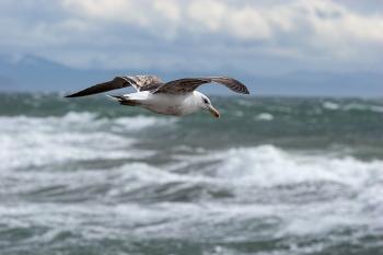 Sobrevolando el Estrecho de Magallanes