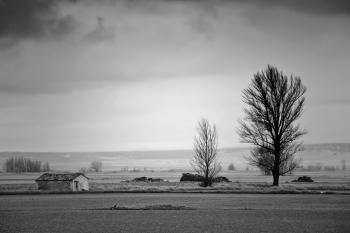 Un día nublado, Gallocanta