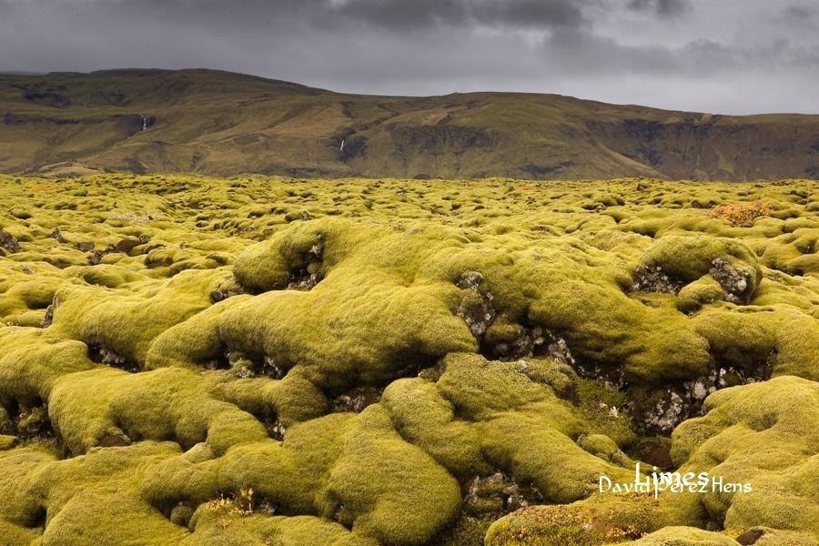 Colonización de campos de lava. Imagen David Pérez Hens - Islandia. - Limes , David Pérez Hens