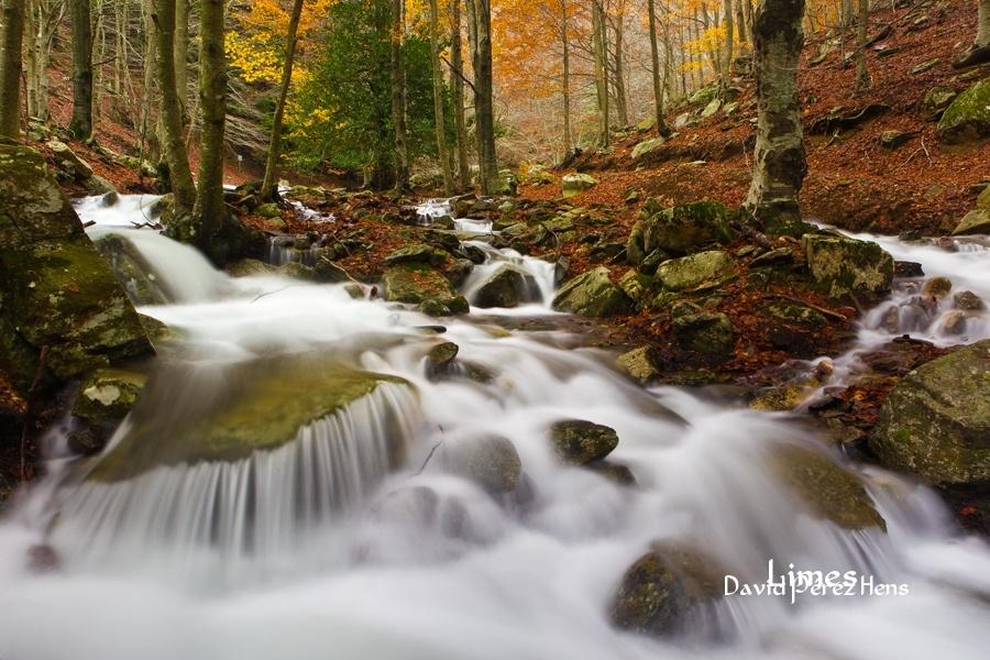 Montseny - Bosques encantados - Limes , David Pérez Hens