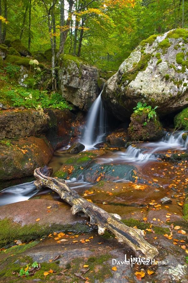 Sierra Cebollera - Bosques encantados - Limes , David Pérez Hens