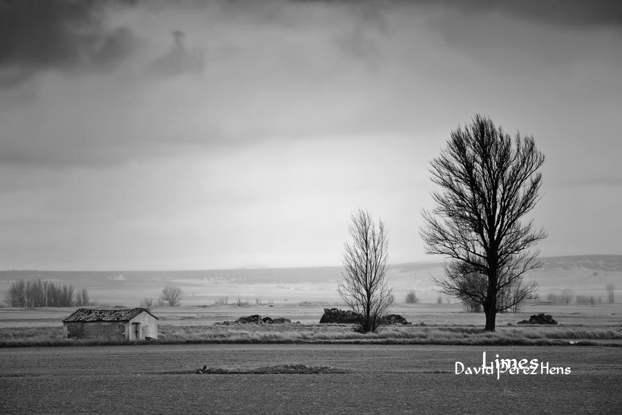 Un día nublado, Gallocanta - Paisaje con grullas  - Limes , David Pérez Hens